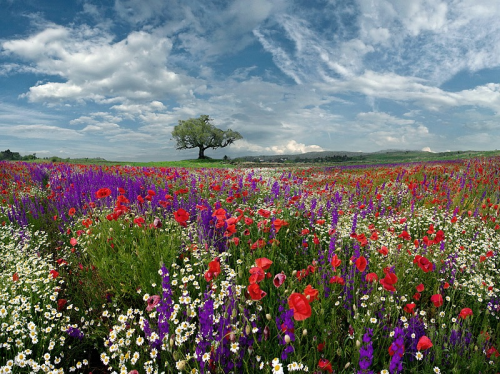 field-of-wild-flowers-by-valeri-simov-pixdaus